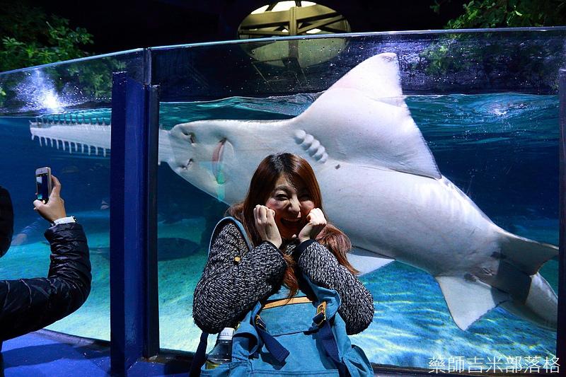 HK_Ocean_Park_1301.jpg
