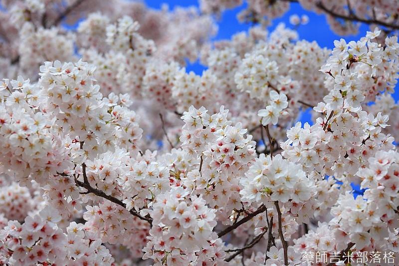 Kyoto_150404_0273.jpg