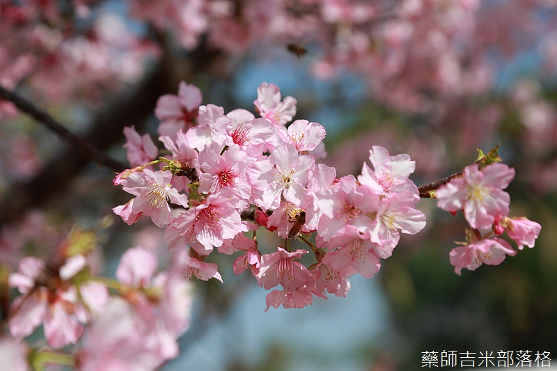 Hsinchu_160301_0504.jpg