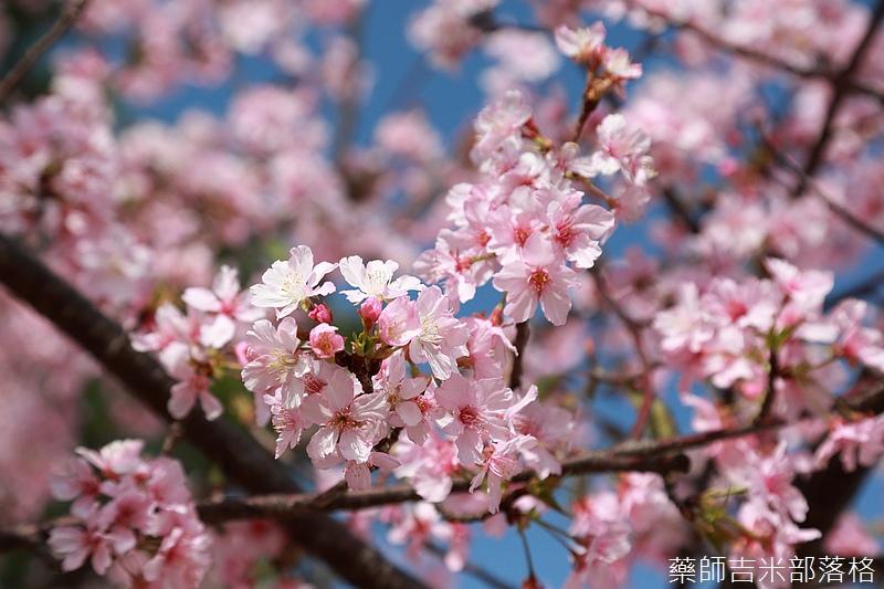 Hsinchu_160301_0515.jpg