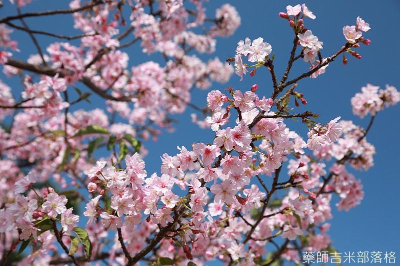 Hsinchu_160301_0523.jpg