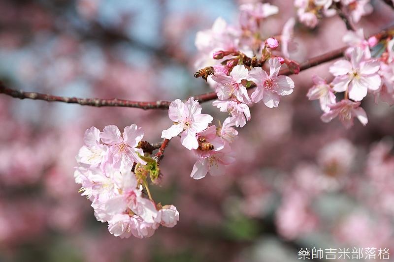 Hsinchu_160301_0533.jpg