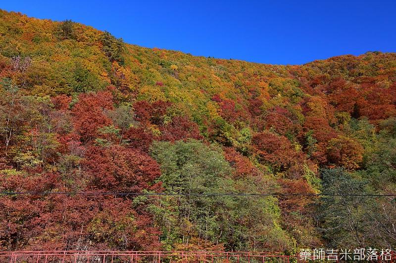 Akita_161102_0124.jpg