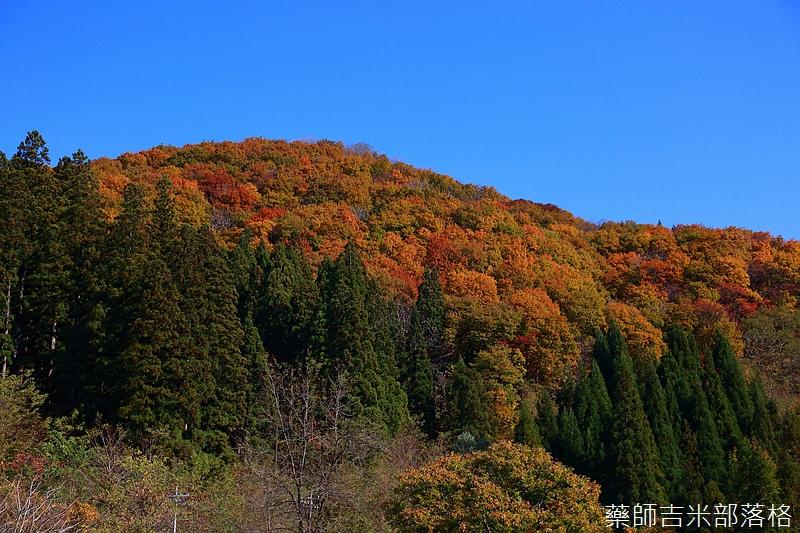 Akita_161102_0155.jpg