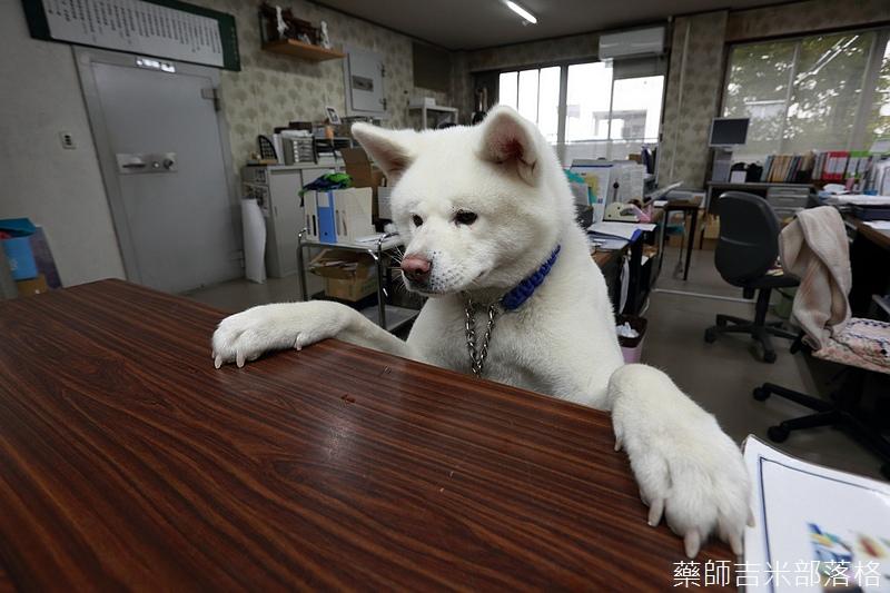 Akita_161101_0439.jpg