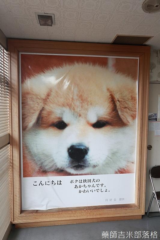 Akita_161101_0442.jpg