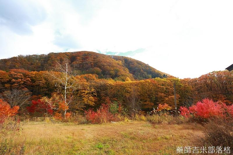 Akita_161102_0437.jpg