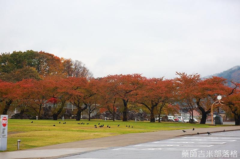 Akita_161101_0765.jpg