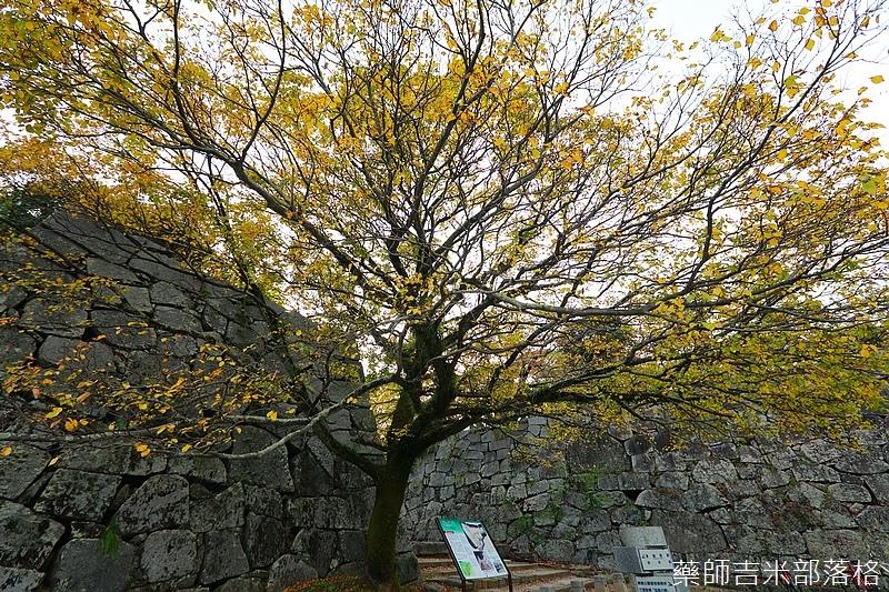 Kyushu_161113_225.jpg