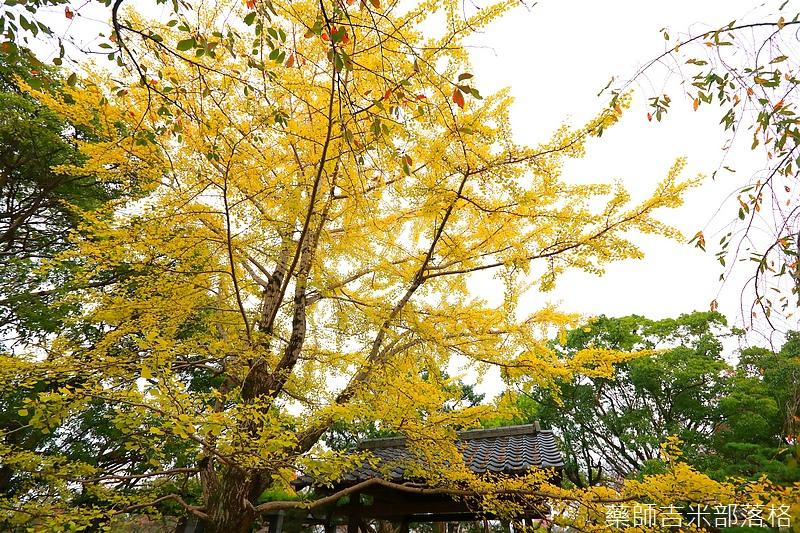 Kyushu_161113_291.jpg