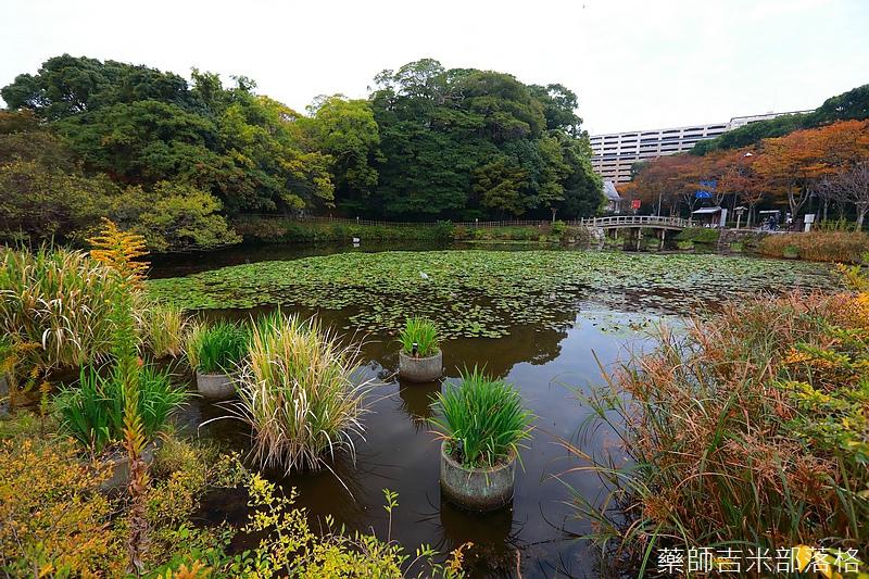 Kyushu_161113_423.jpg