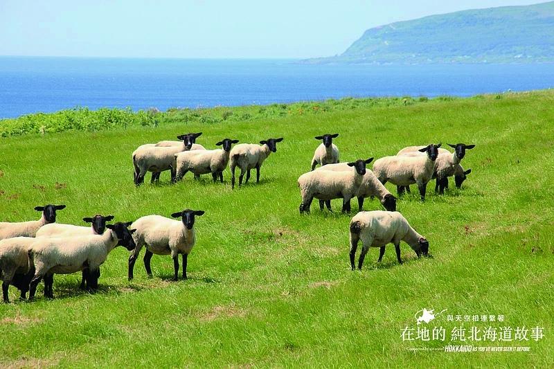 5_綿羊牧場.jpg