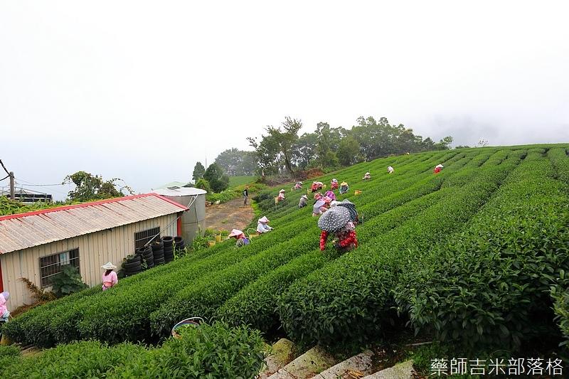 Chiayi_Tea_181.jpg