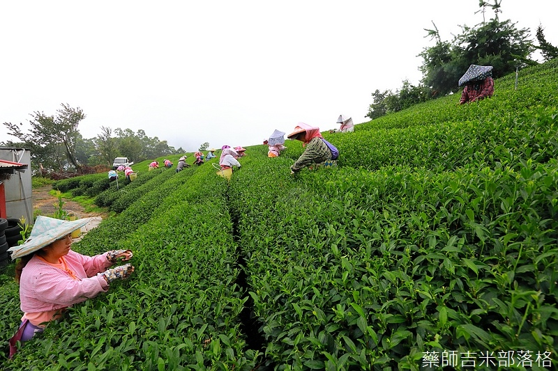 Chiayi_Tea_195.jpg