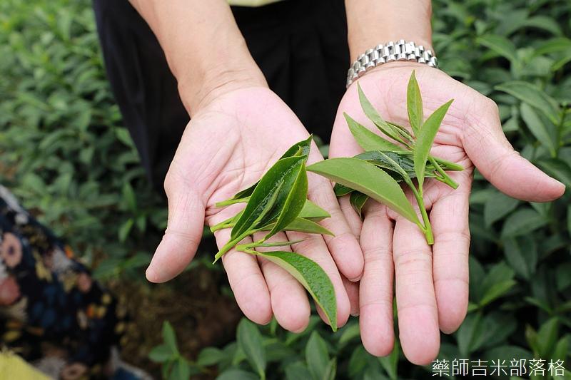 Chiayi_Tea_226.jpg