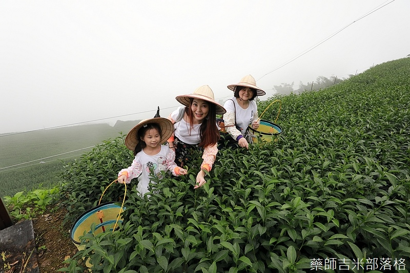 Chiayi_Tea_233.jpg