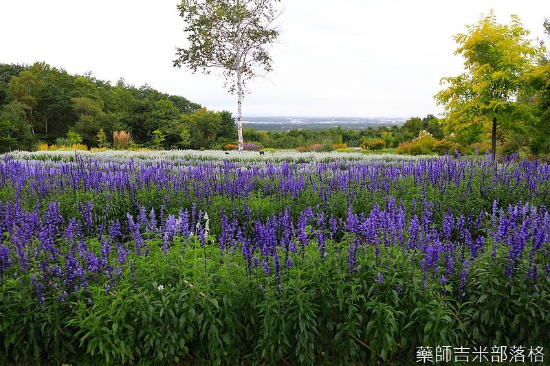 Hokkaido_170908_686.jpg