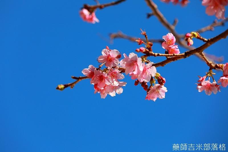 Izu_180112_391.jpg