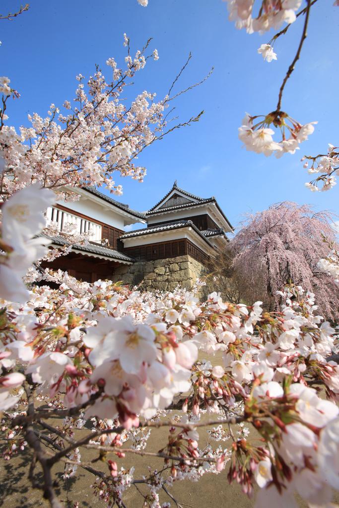 01-2.上田城跡公園の桜[縦]