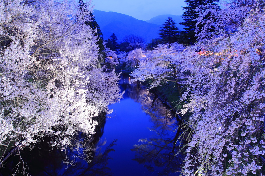 上田城跡公園の夜桜[横]