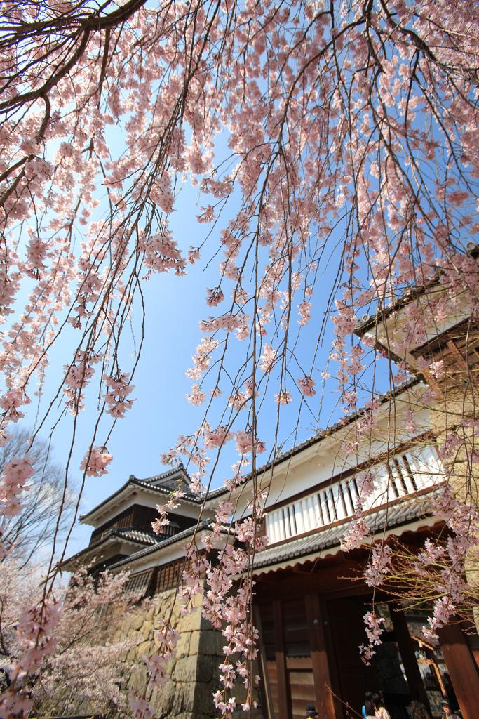 01-3.上田城跡公園の桜[縦]