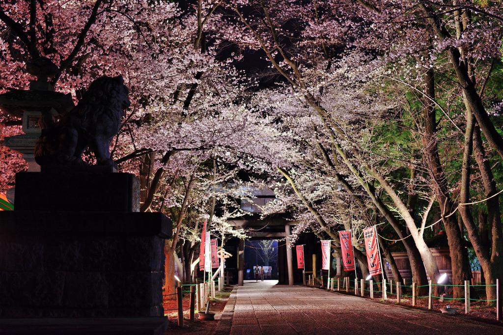 真田神社_桜