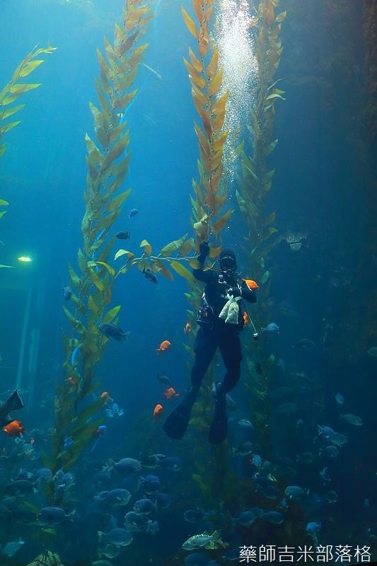 Aquarium_156.jpg