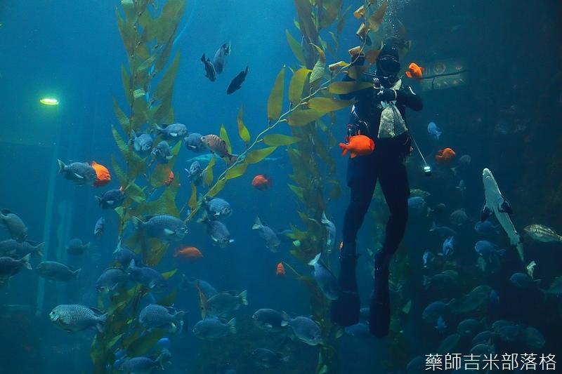 Aquarium_160.jpg