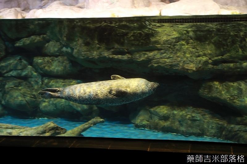 Aquarium_210.jpg