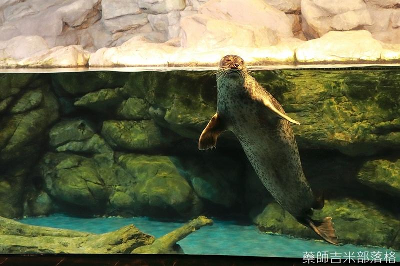 Aquarium_251.jpg