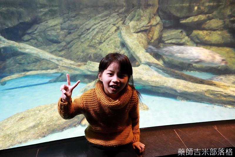 Aquarium_262.jpg