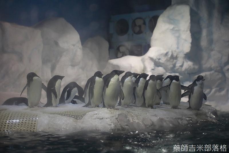 Aquarium_276.jpg