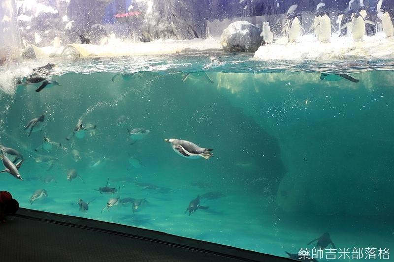 Aquarium_289.jpg