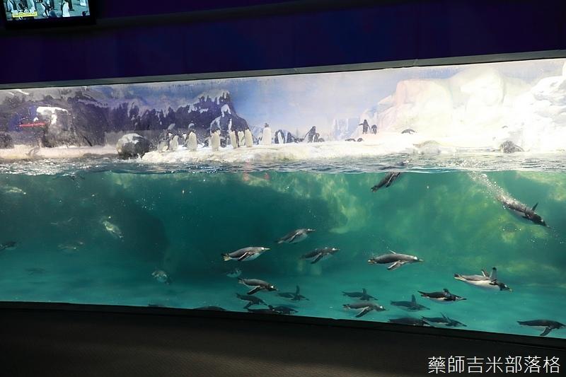 Aquarium_291.jpg