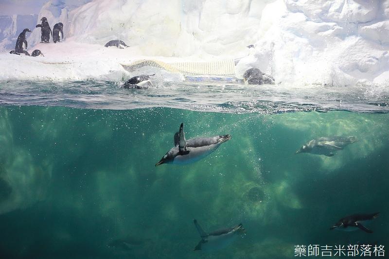 Aquarium_292.jpg