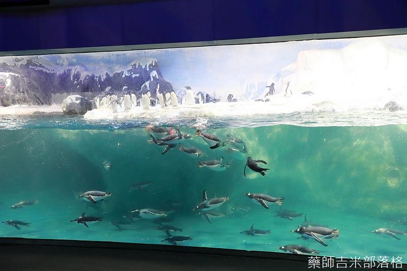 Aquarium_294.jpg