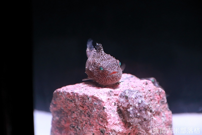 Aquarium_371.jpg