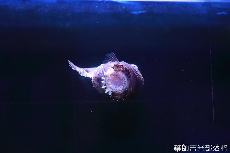 Aquarium_374.jpg