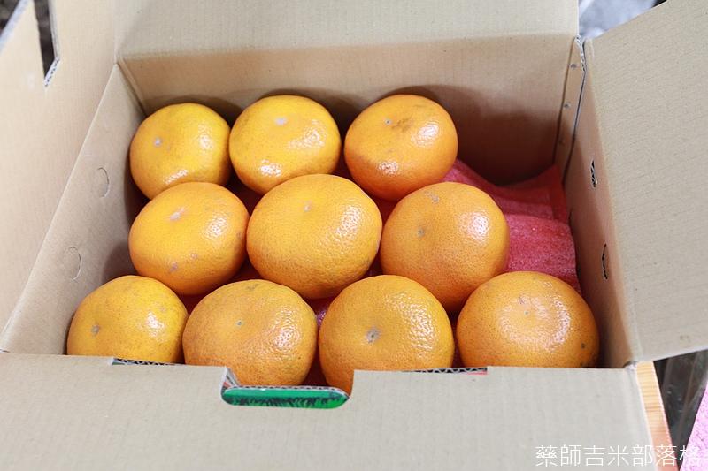Yunlin_linnei_433.jpg