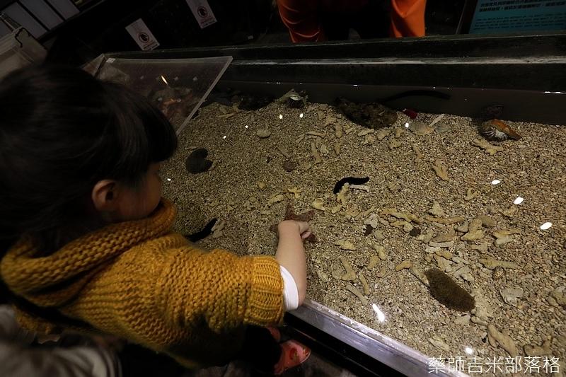 Aquarium_460.jpg