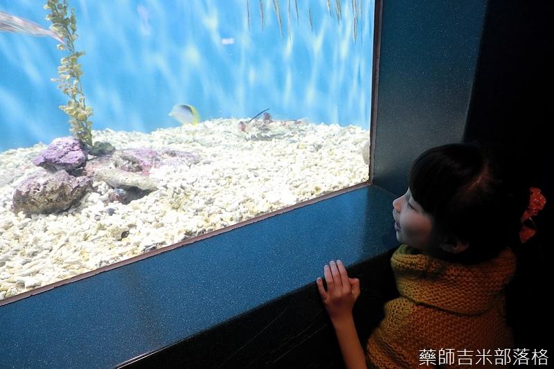 Aquarium_486.jpg