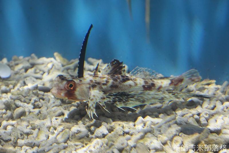 Aquarium_488.jpg