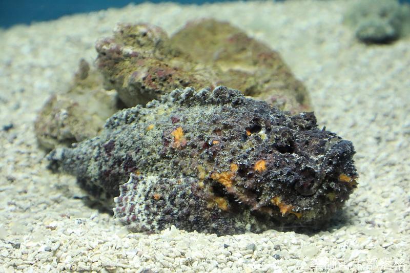 Aquarium_510.jpg