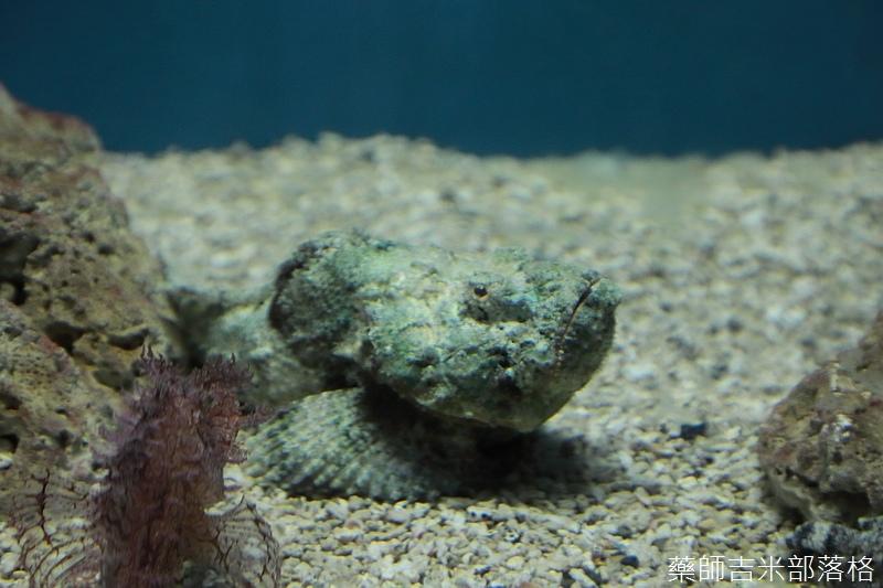 Aquarium_512.jpg