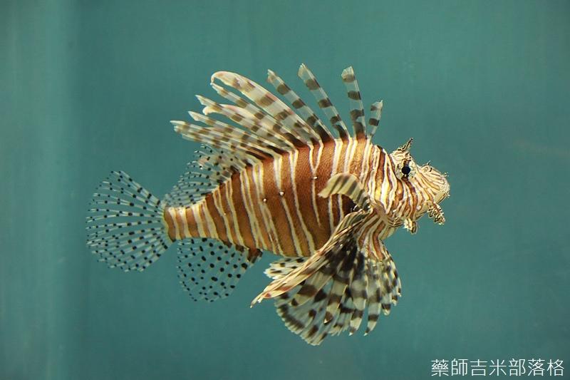 Aquarium_530.jpg