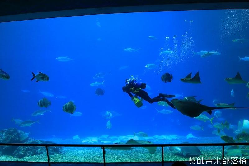 Aquarium_551.jpg