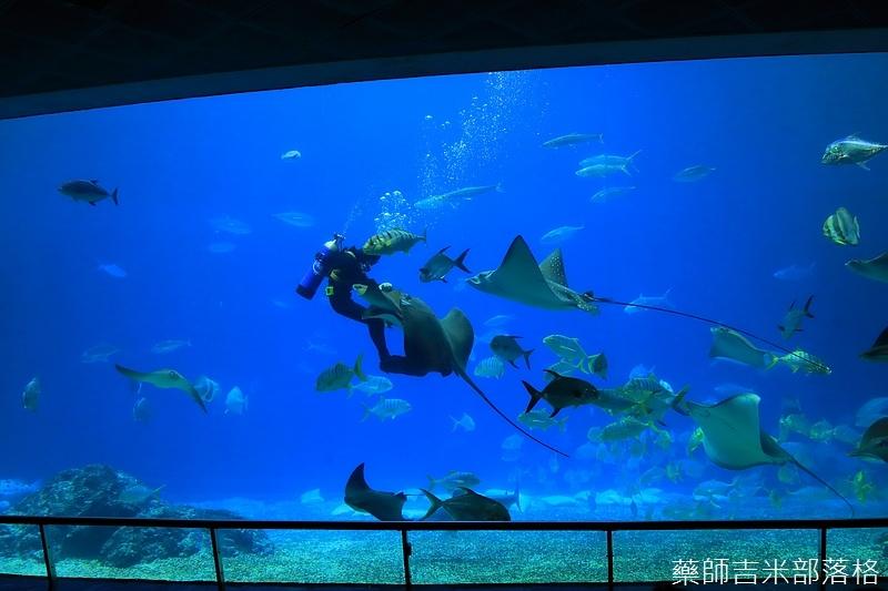 Aquarium_557.jpg