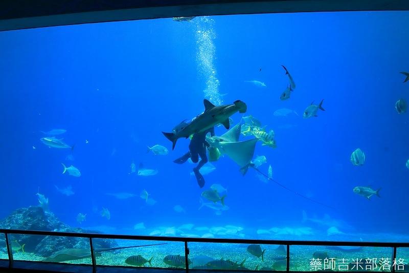 Aquarium_600.jpg