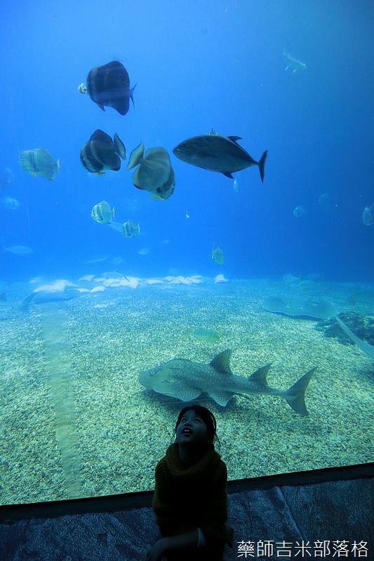 Aquarium_638.jpg