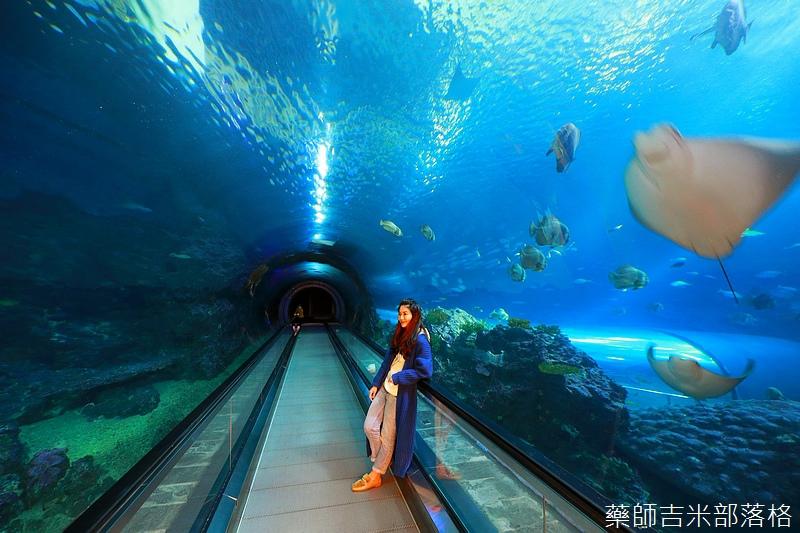 Aquarium_686.jpg
